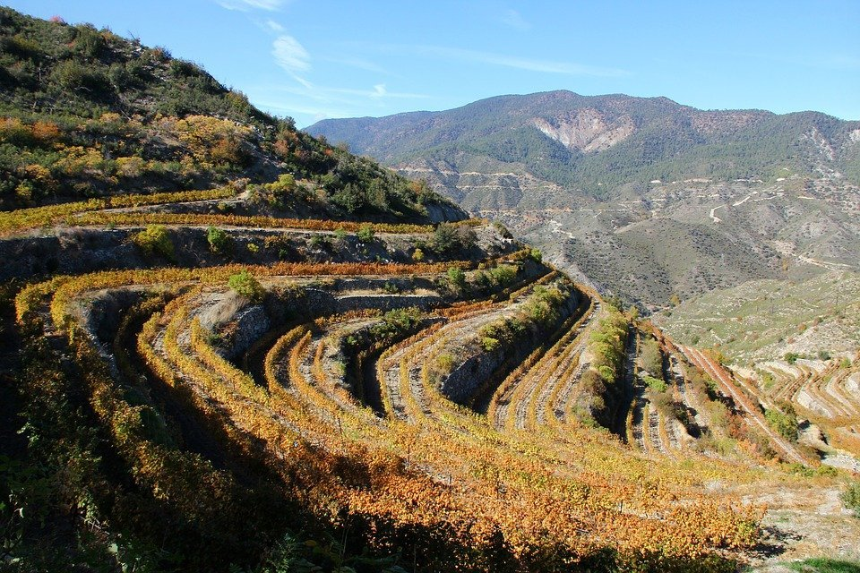 Troodos, Pitsilia, Winery, Vineyard, Vines, Mountain